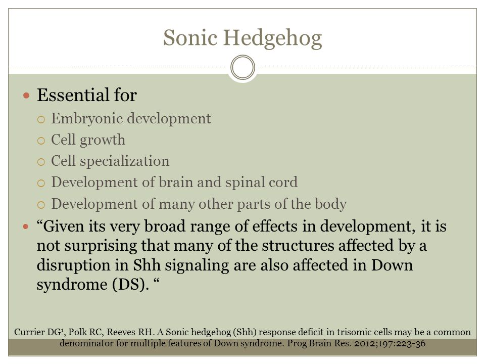 Sonic Hedgehog Essential for