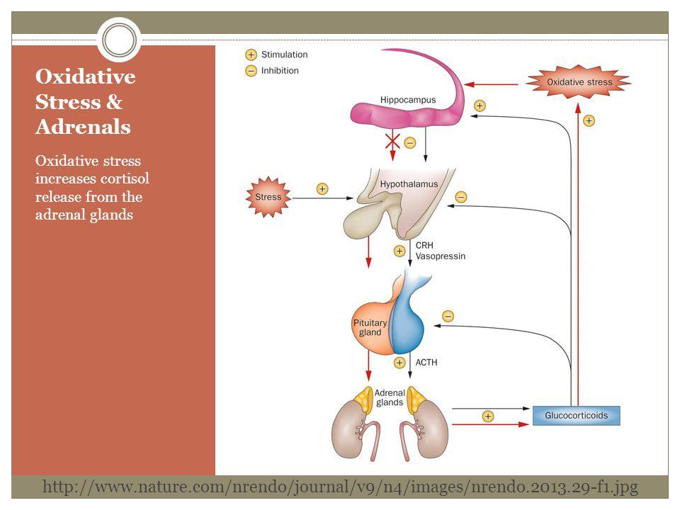 Oxidative Stress & Adrenals