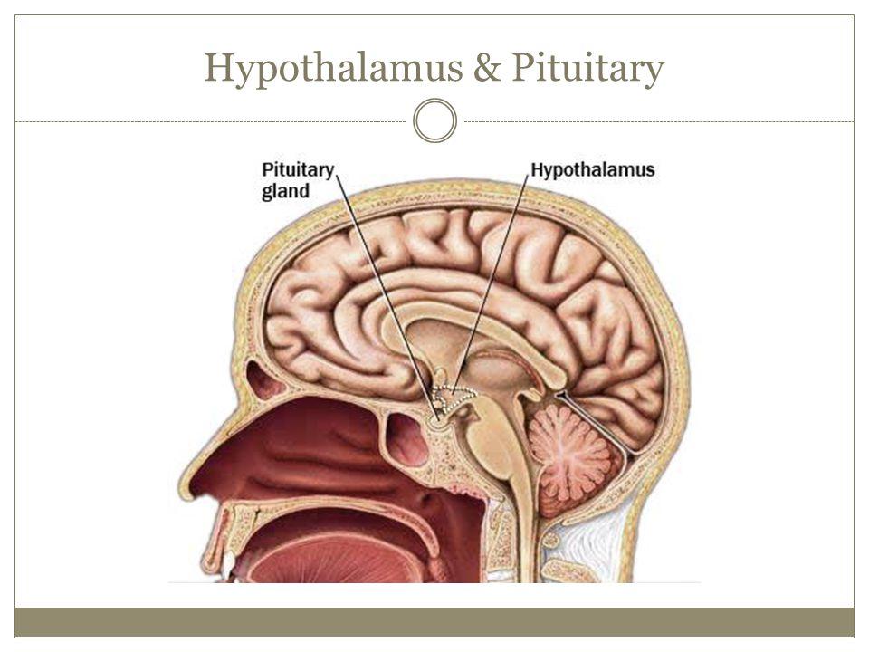 Hypothalamus & Pituitary