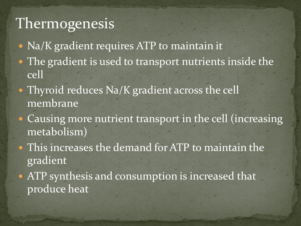 Thermogenesis Na/K gradient requires ATP to maintain it