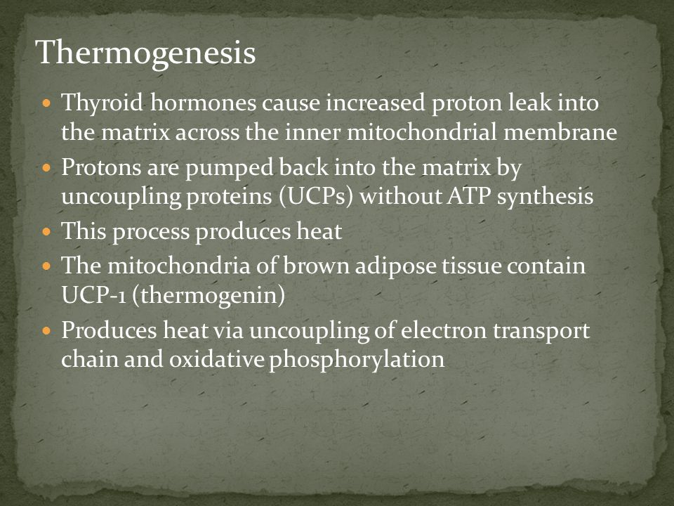 Thermogenesis Thyroid hormones cause increased proton leak into the matrix across the inner mitochondrial membrane.