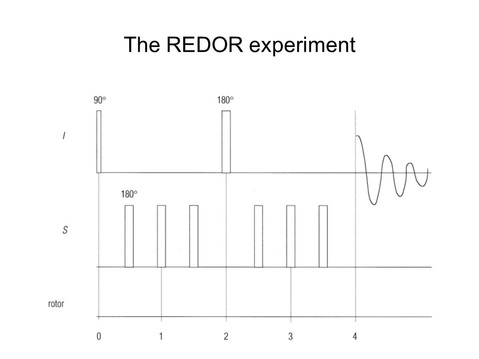 The REDOR experiment
