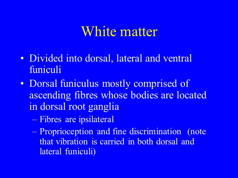White matter Divided into dorsal, lateral and ventral funiculi