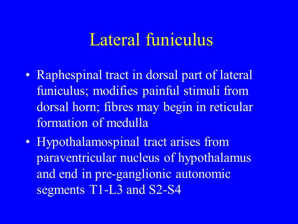 Lateral funiculus