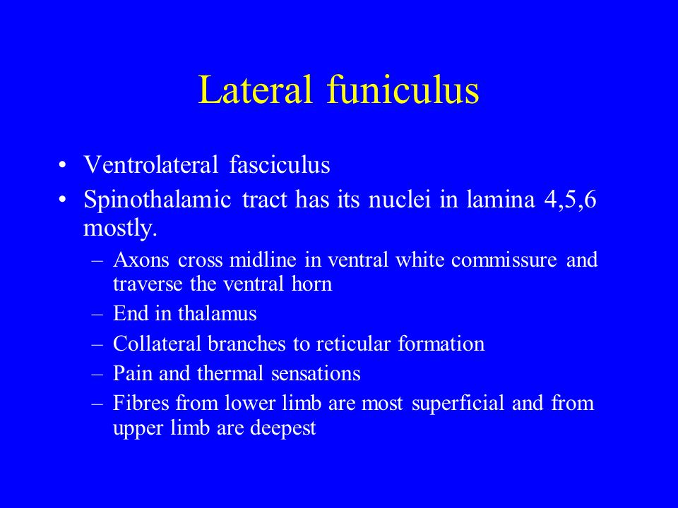 Lateral funiculus Ventrolateral fasciculus