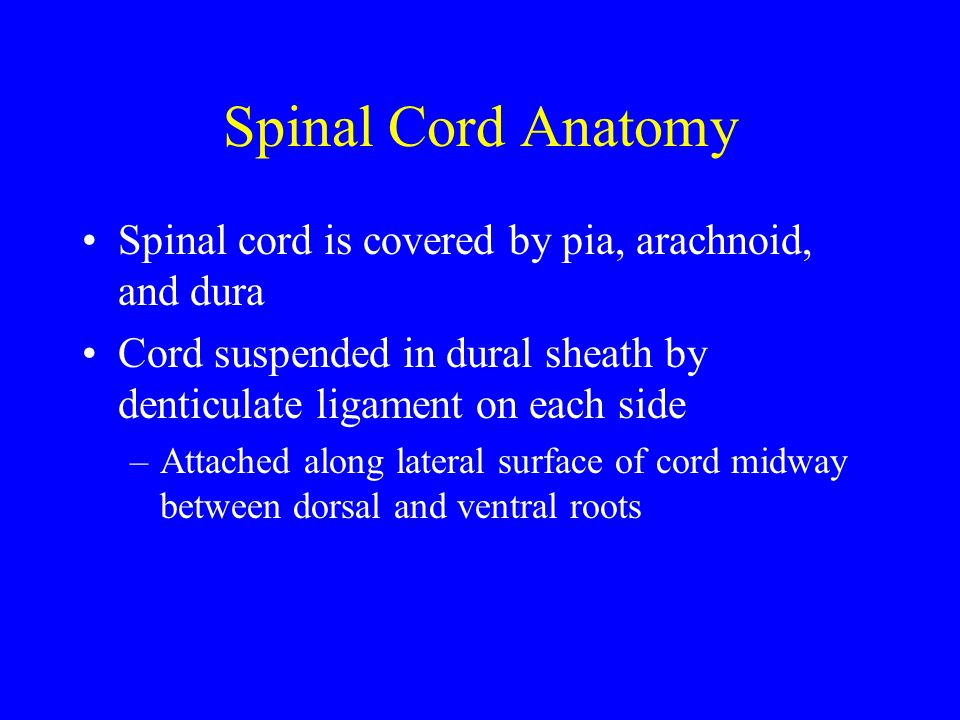 Spinal Cord Anatomy Spinal cord is covered by pia, arachnoid, and dura