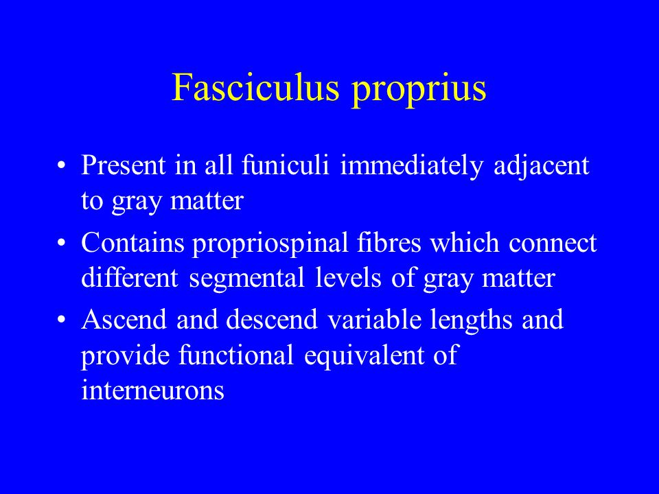 Fasciculus proprius Present in all funiculi immediately adjacent to gray matter.