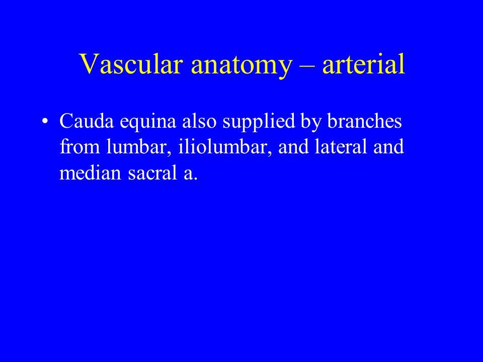 Vascular anatomy – arterial