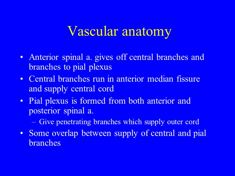 Vascular anatomy Anterior spinal a. gives off central branches and branches to pial plexus.
