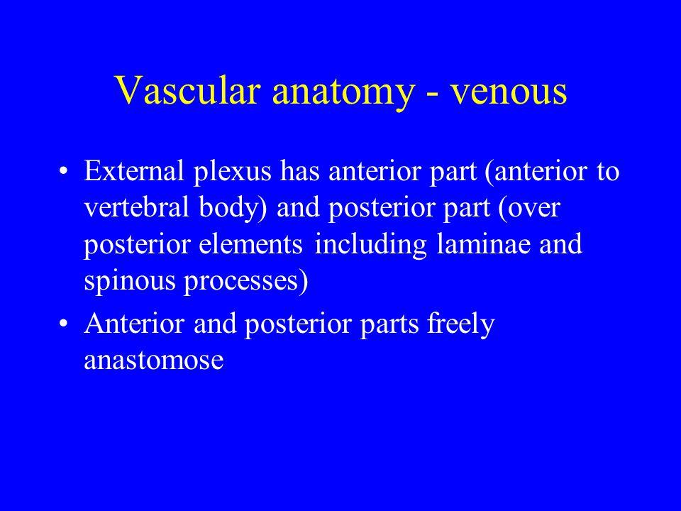 Vascular anatomy - venous