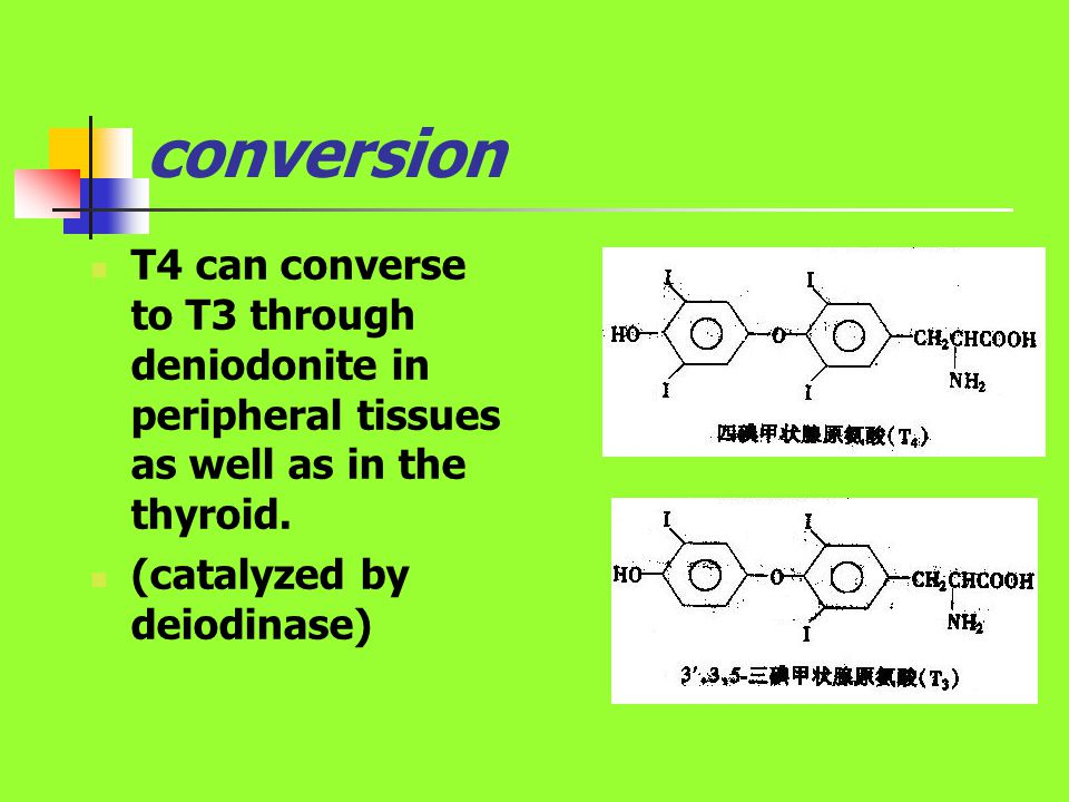 conversion T4 can converse to T3 through deniodonite in peripheral tissues as well as in the thyroid.