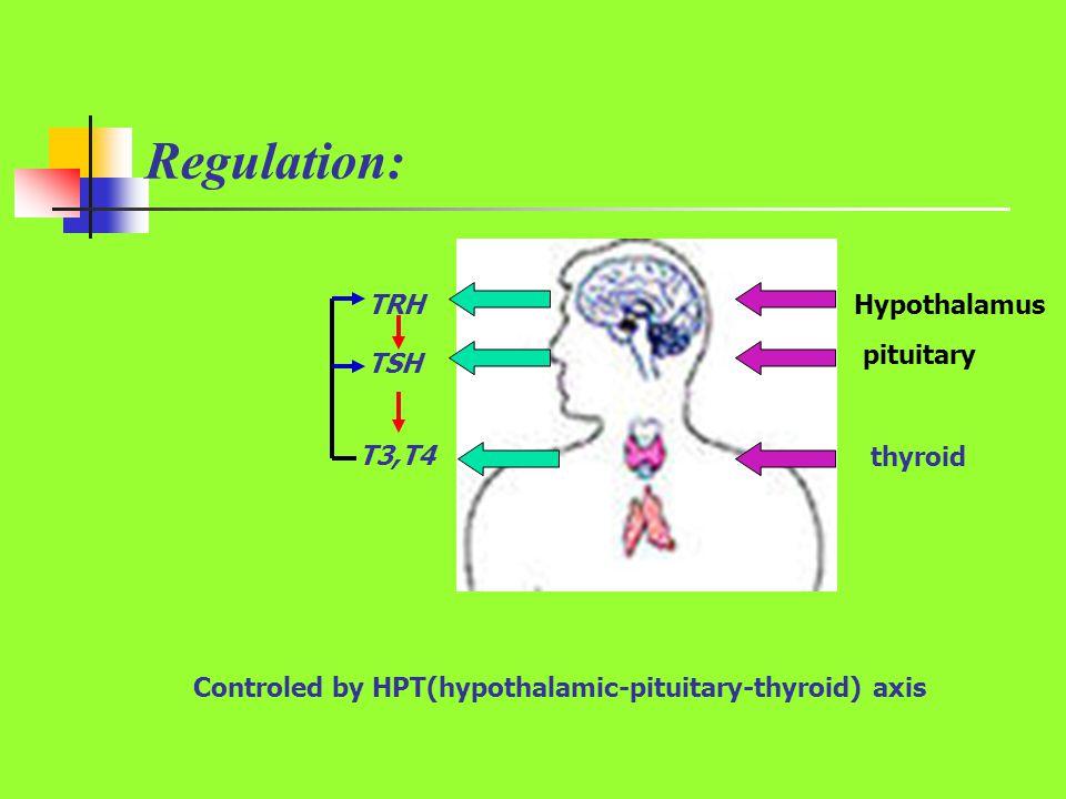 Regulation: TRH Hypothalamus pituitary TSH T3,T4 thyroid