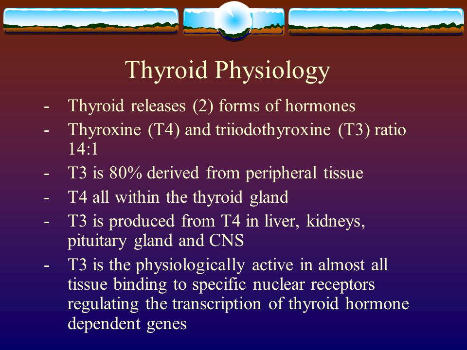 Thyroid Physiology - Thyroid releases (2) forms of hormones
