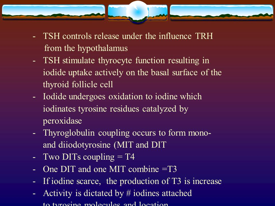 - TSH controls release under the influence TRH from the hypothalamus