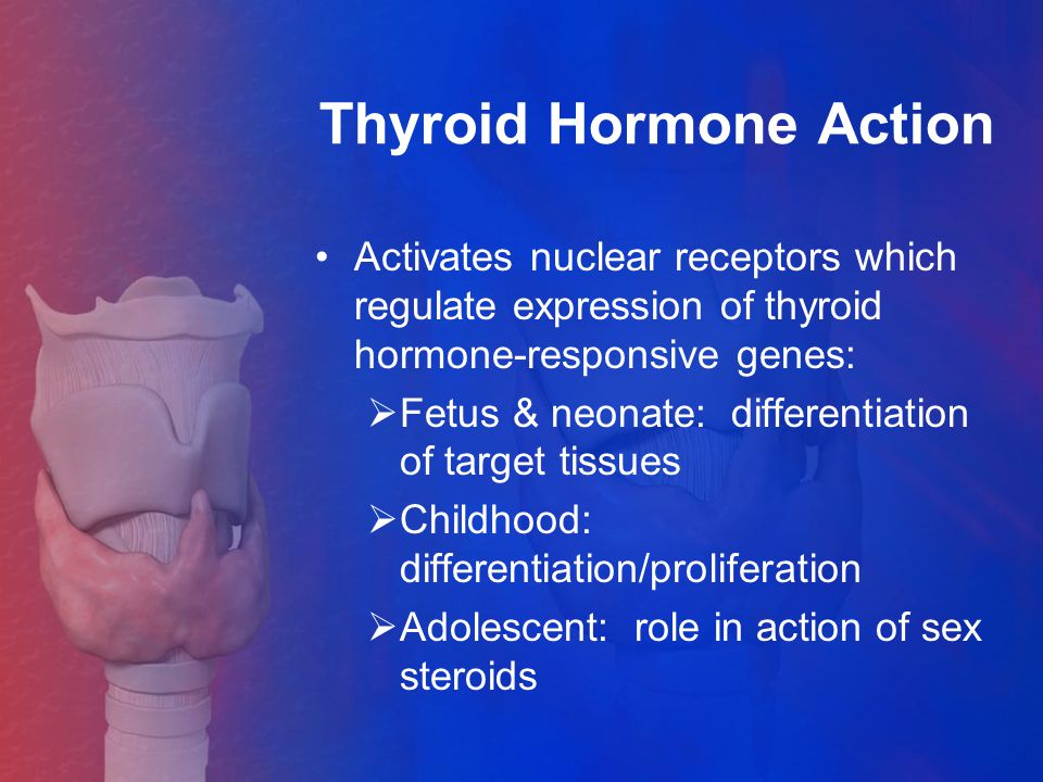 Thyroid Hormone Action
