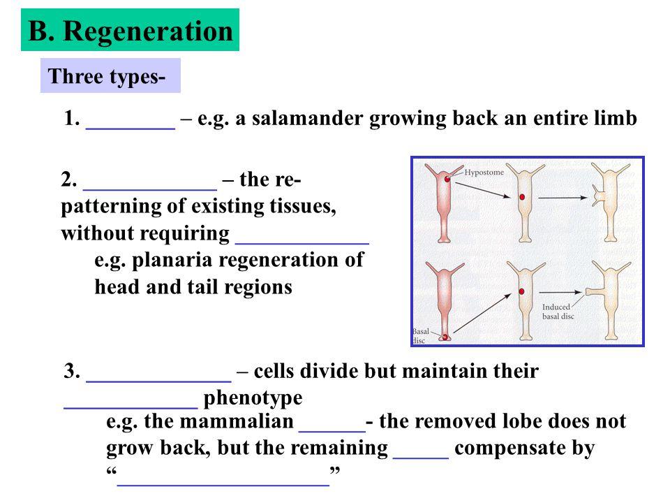 B. Regeneration Three types-