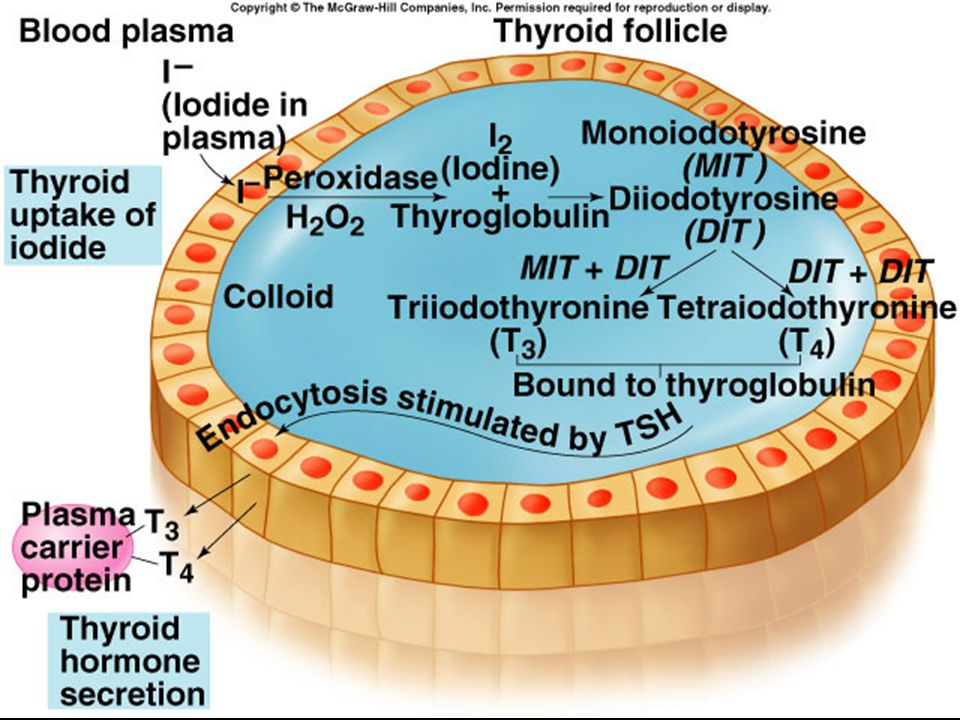 Anti-thyroid drugs