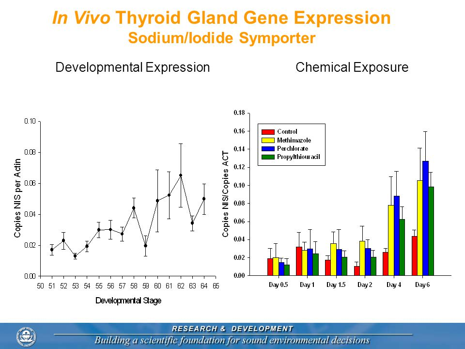 In Vivo Thyroid Gland Gene Expression Sodium/Iodide Symporter