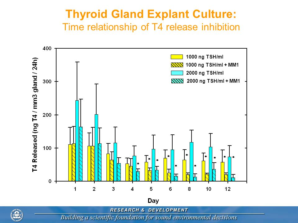 Thyroid Gland Explant Culture: Time relationship of T4 release inhibition