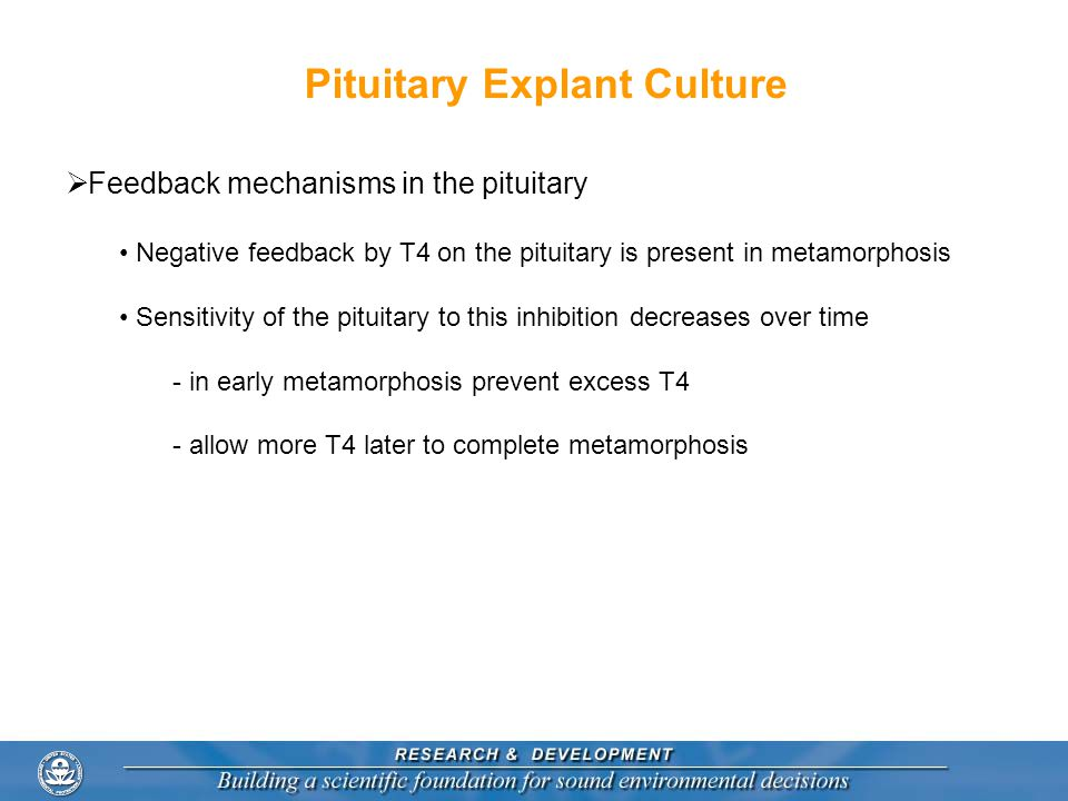 Pituitary Explant Culture