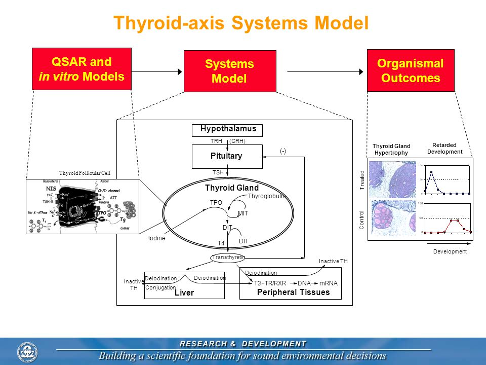 Thyroid-axis Systems Model