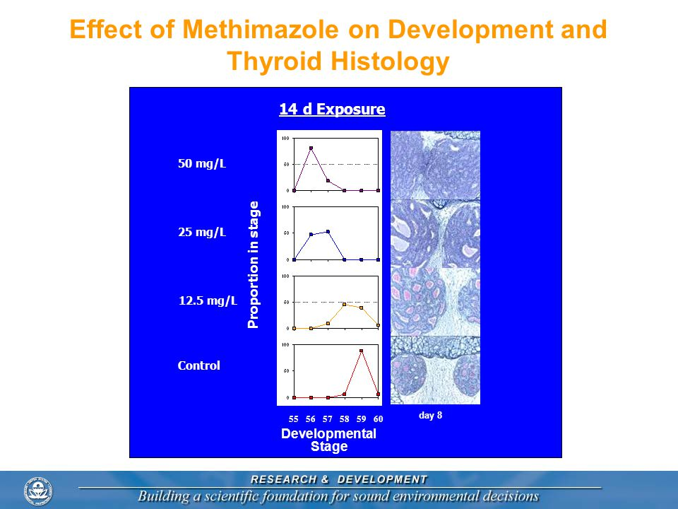 Effect of Methimazole on Development and Thyroid Histology