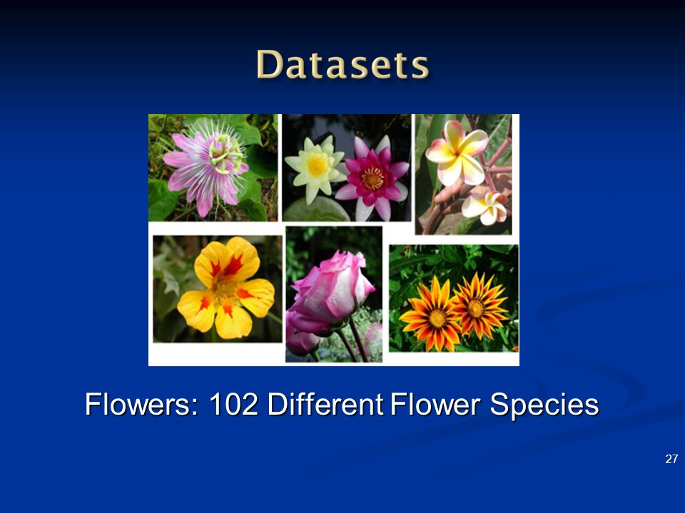 Flowers: 102 Different Flower Species