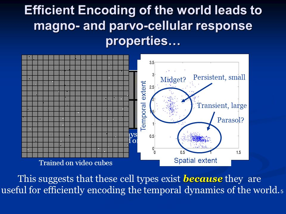 3/22/2017 Efficient Encoding of the world leads to magno- and parvo-cellular response properties… Trained on video cubes.