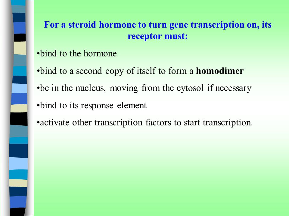 For a steroid hormone to turn gene transcription on, its receptor must: