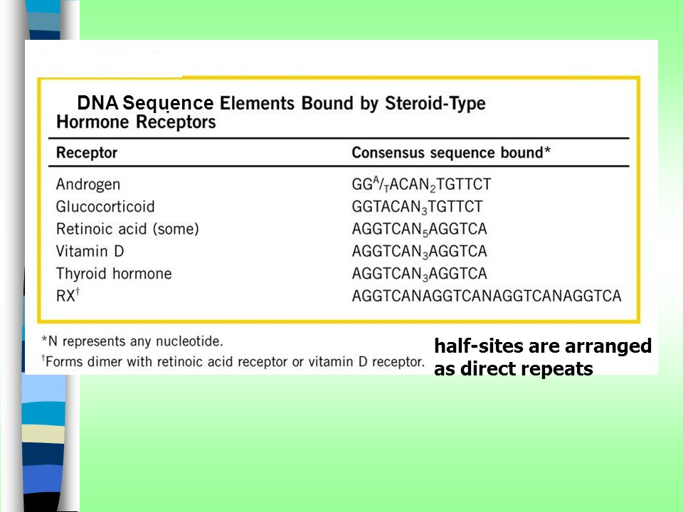 DNA Sequence half-sites are arranged as direct repeats
