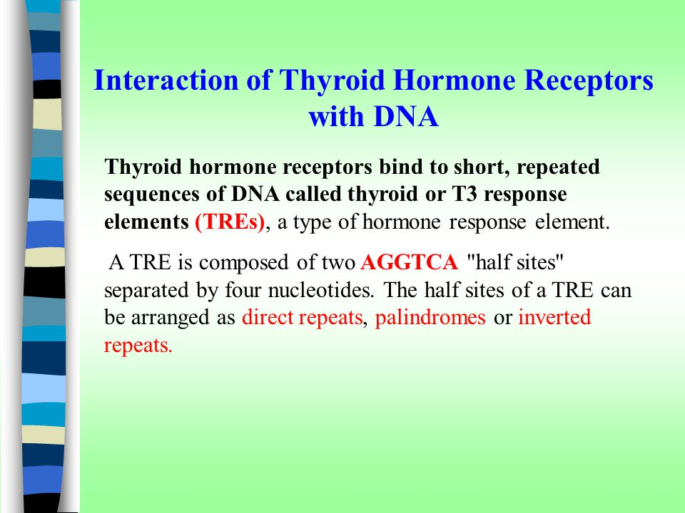 Interaction of Thyroid Hormone Receptors with DNA