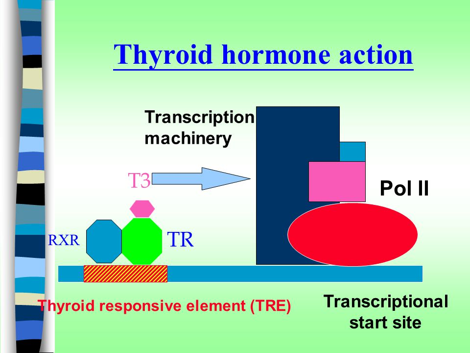 Thyroid hormone action