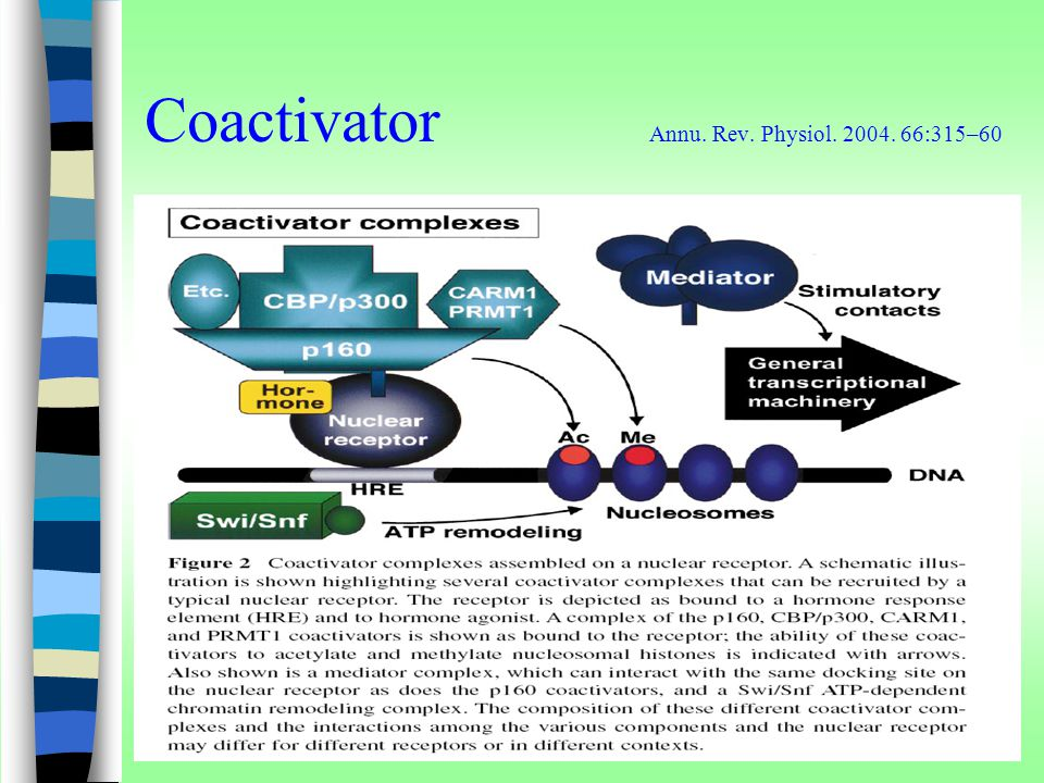 Coactivator Annu. Rev. Physiol. 2004. 66:315–60