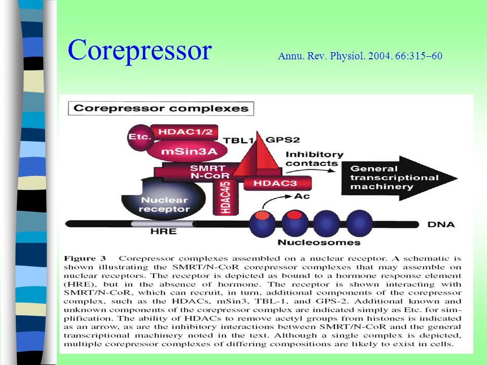 Corepressor Annu. Rev. Physiol. 2004. 66:315–60