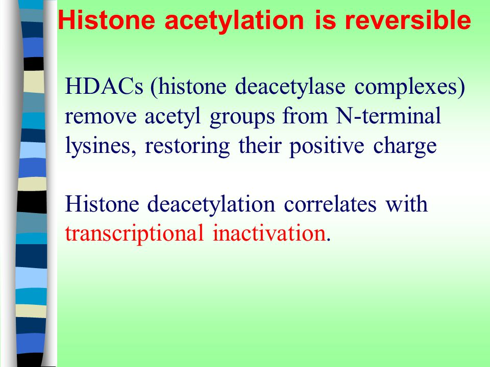 Histone acetylation is reversible