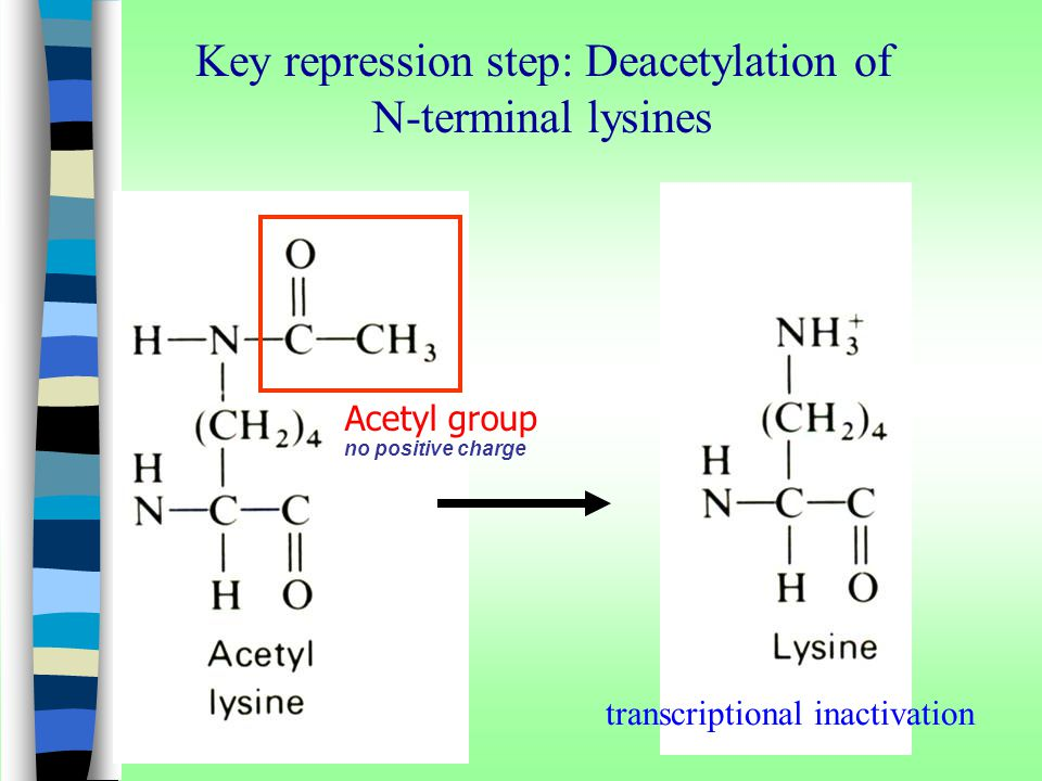 Key repression step: Deacetylation of