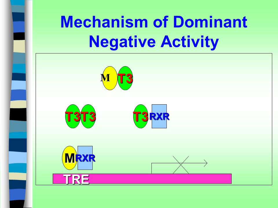 Mechanism of Dominant Negative Activity
