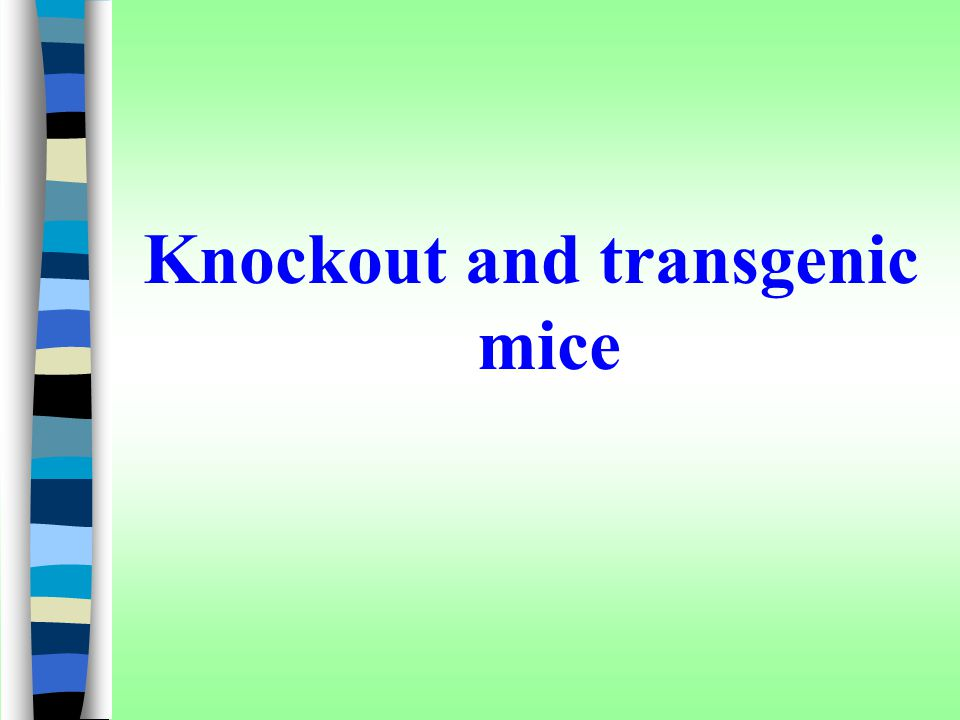 Knockout and transgenic mice
