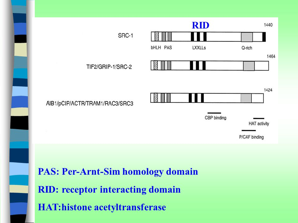 RID RID. PAS: Per-Arnt-Sim homology domain. RID: receptor interacting domain.