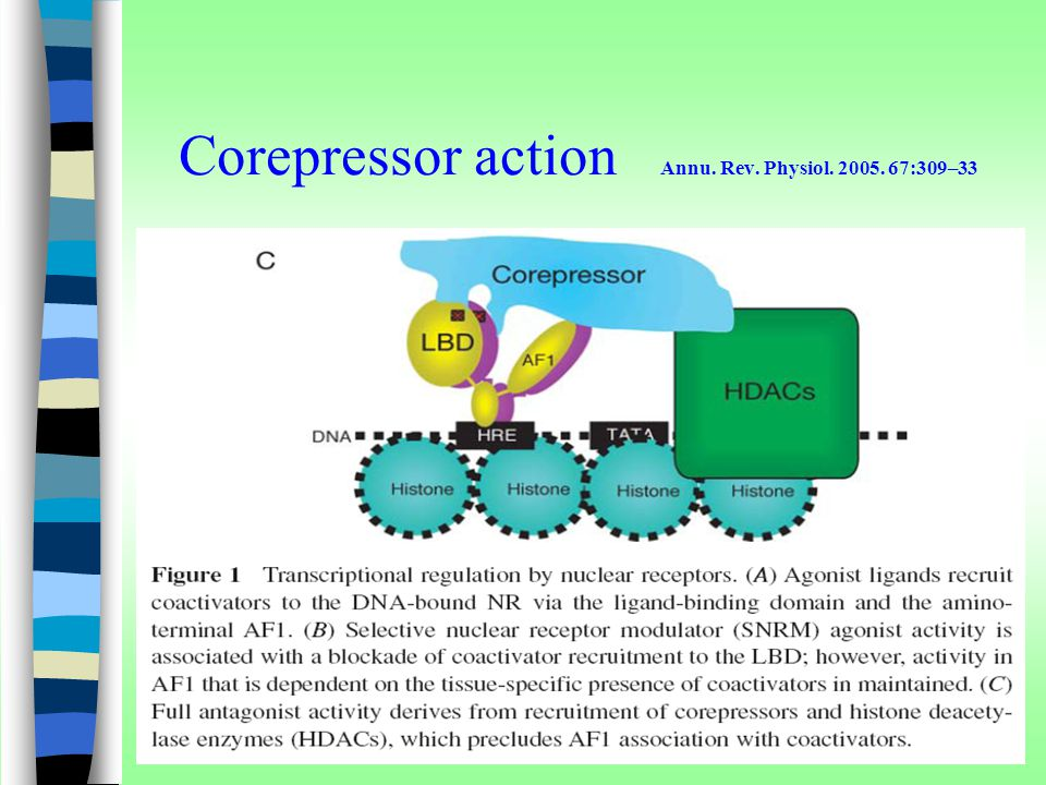 Corepressor action Annu. Rev. Physiol. 2005. 67:309–33