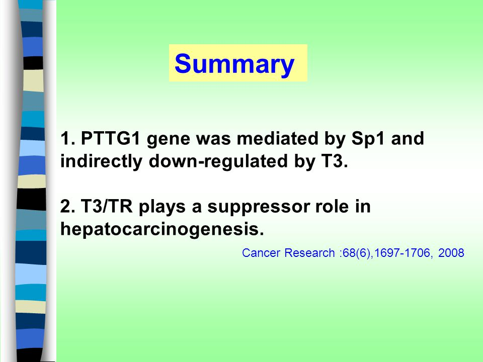 Summary 1. PTTG1 gene was mediated by Sp1 and indirectly down-regulated by T3. 2. T3/TR plays a suppressor role in hepatocarcinogenesis.