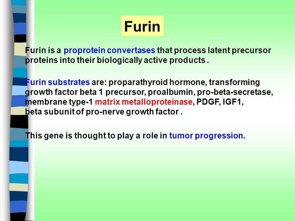 Furin Furin is a proprotein convertases that process latent precursor