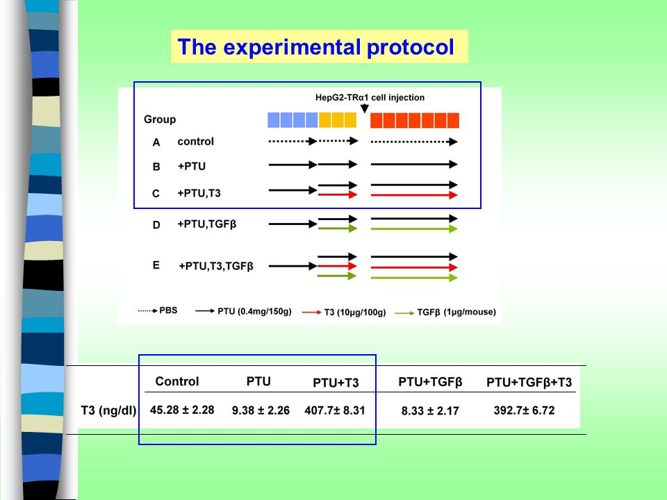 The experimental protocol