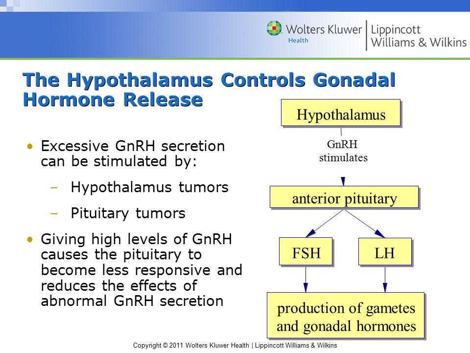 The Hypothalamus Controls Gonadal Hormone Release
