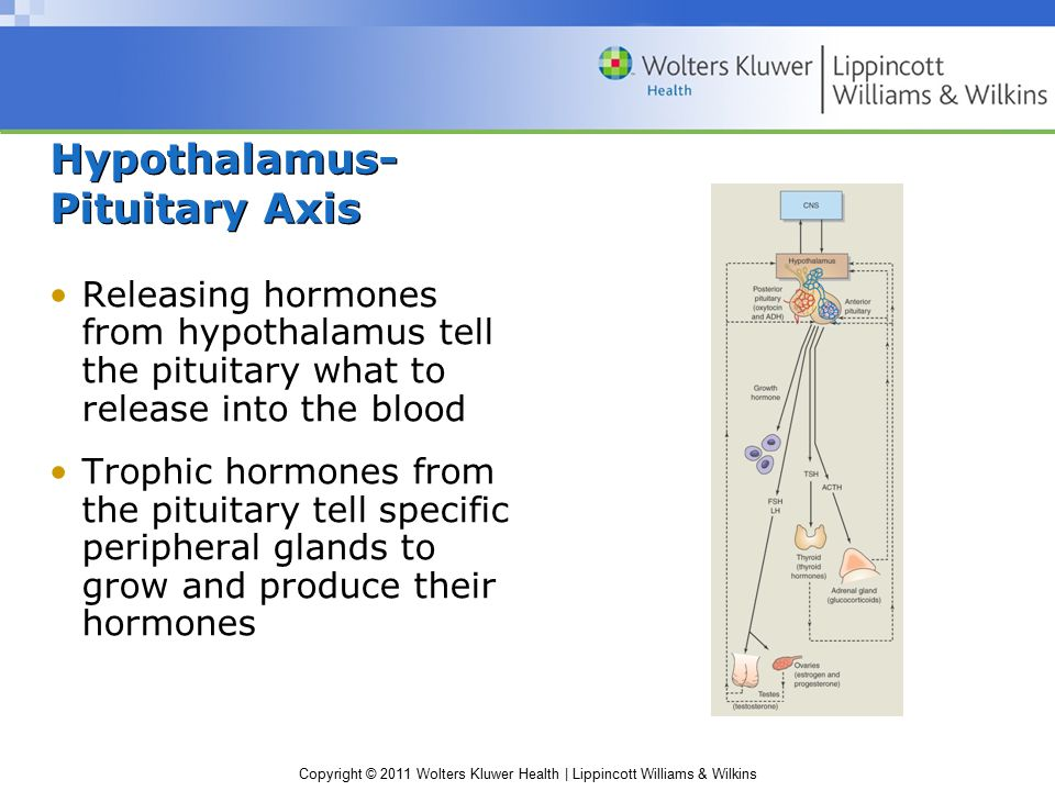 Hypothalamus- Pituitary Axis