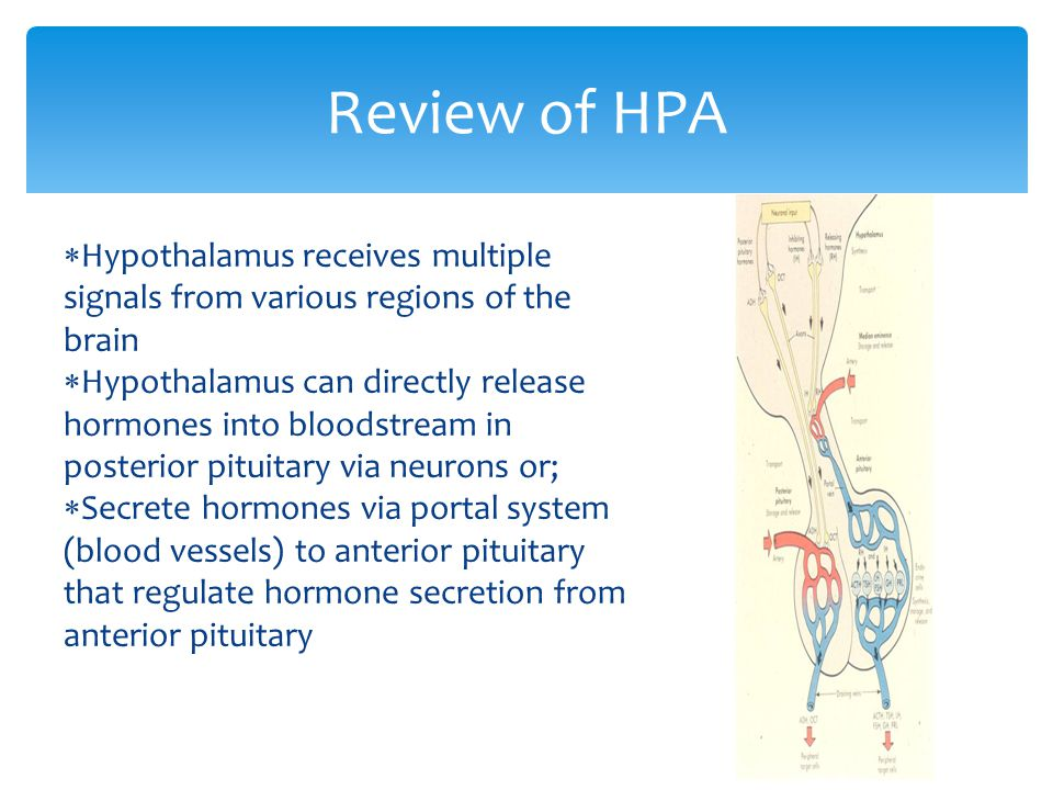 Review of HPA Hypothalamus receives multiple signals from various regions of the brain.