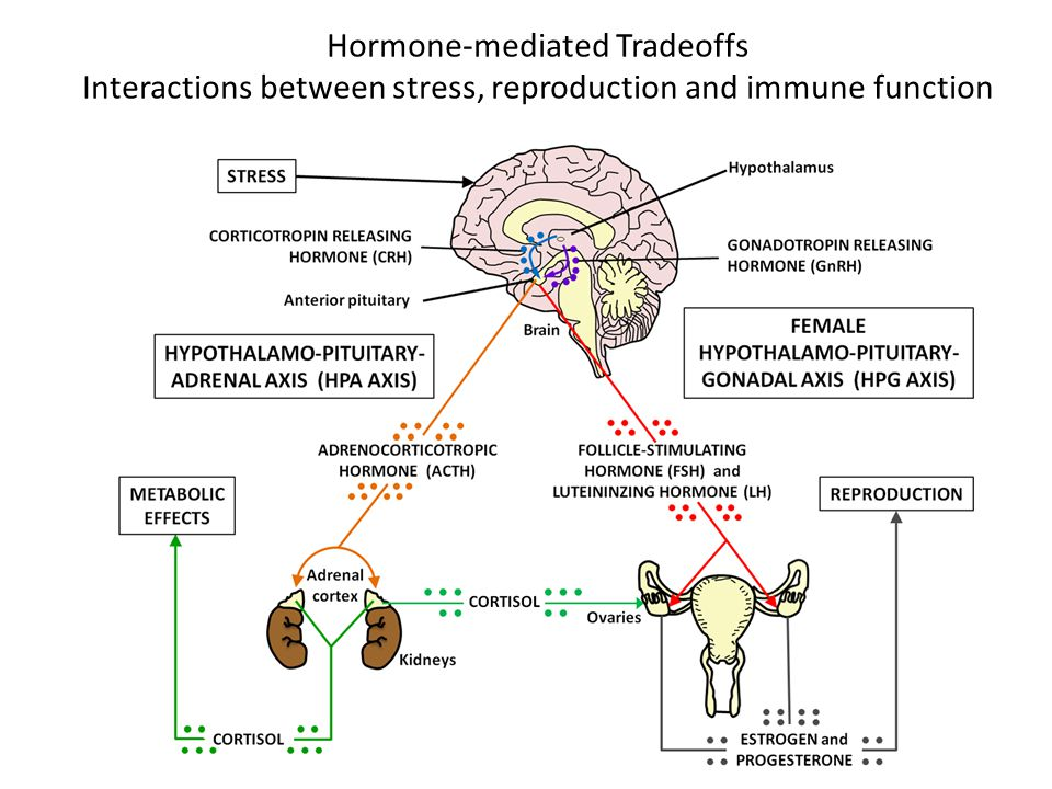 Hormone-mediated Tradeoffs Interactions between stress, reproduction and immune function
