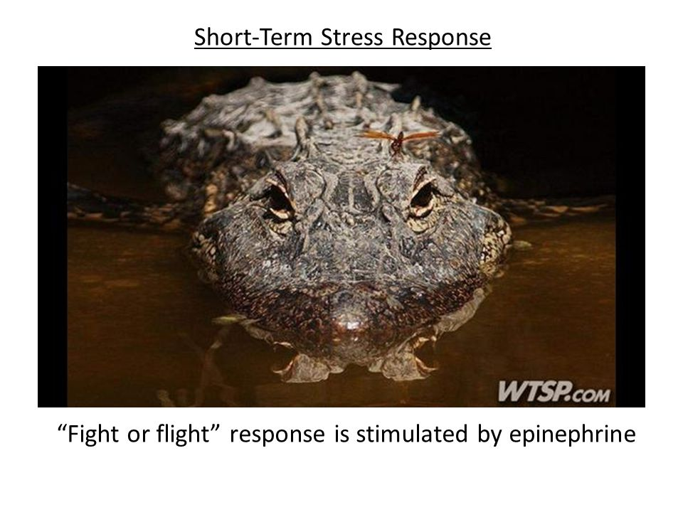 Short-Term Stress Response
