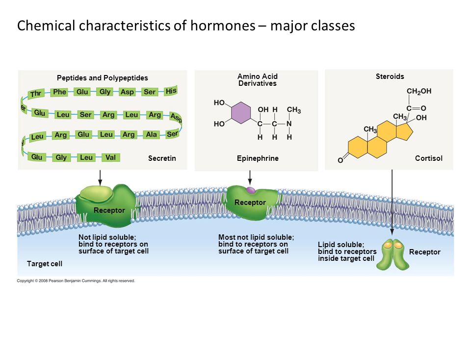 Chemical characteristics of hormones – major classes