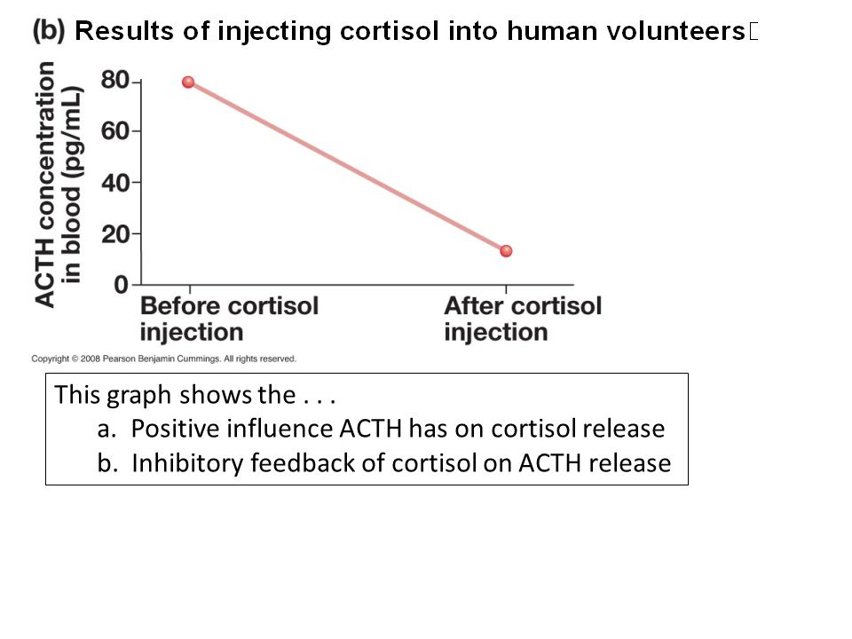This graph shows the . a. Positive influence ACTH has on cortisol release.